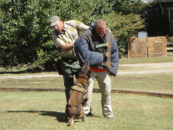 """Sheriff Tommy Jones in the """"bite suit"""" for a K9 demo"""